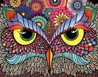 Owl Face Fine Art Print