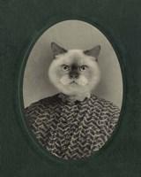 Cat Series #1 Framed Print