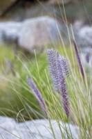 Purple Wild Grass I Fine Art Print