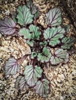 Desert Rock Plant Fine Art Print