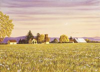 Country Morning Fine Art Print