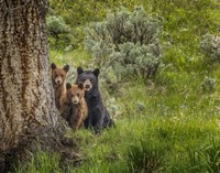 Sow and Cubs Family Fine Art Print