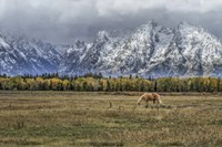 Fine Dining In The Tetons Fine Art Print