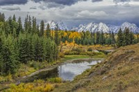 Gtnp Fall Color With Mountains Fine Art Print