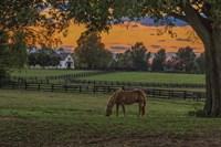 Horse Farm Sunset Fine Art Print