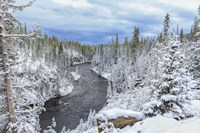 Yellowstone Winter In Fall Fine Art Print
