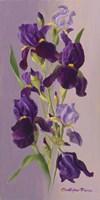 Study In Lavender Fine Art Print