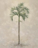 Palm Tree 4 Fine Art Print