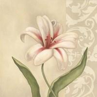 Cream Lily Framed Print