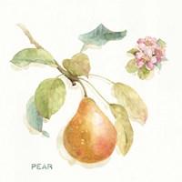 Orchard Bloom II Fine Art Print