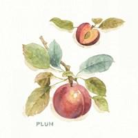 Orchard Bloom IV Framed Print