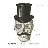 Dandy Bones I Framed Print