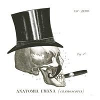 Dandy Bones III Framed Print