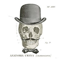 Dandy Bones IV Framed Print