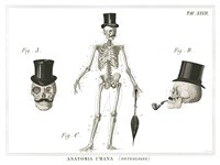 Dandy Bones Fine Art Print