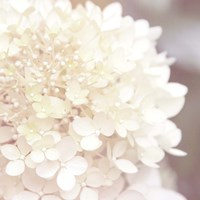 Hydrangea Dream I Fine Art Print