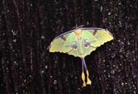 Butterfly Against Tree bark Fine Art Print
