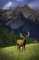 Elk Against Mountainside Fine Art Print