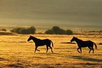 Horses Running at Sunset Fine Art Print