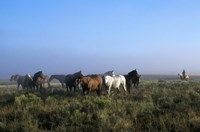 Group of Horses in Field Fine Art Print