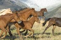 Brown Wild Horses Running Fine Art Print