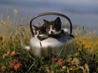 Kitten on Tea Pot in Field Fine Art Print