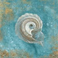 Treasures from the Sea III Aqua Framed Print