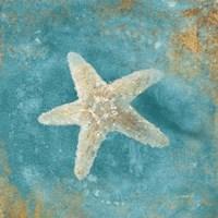 Treasures from the Sea IV Aqua Framed Print