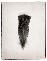 Feather III BW Framed Print