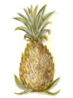 Pineapple Sketch I Fine Art Print
