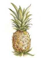 Pineapple Sketch II Fine Art Print