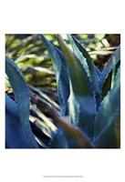 Succulent Vibes II Fine Art Print