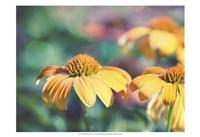Mellow Yellows II Framed Print