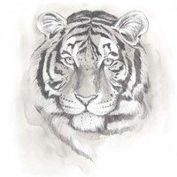 Big Cat Study II Fine Art Print