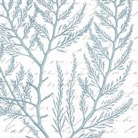 Aqua Marine VIII Fine Art Print