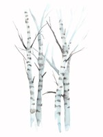 Aquarelle Birches I Fine Art Print