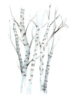 Aquarelle Birches II Framed Print
