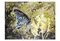 Butterfly in Nature I Fine Art Print