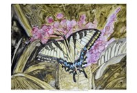 Butterfly in Nature II Framed Print