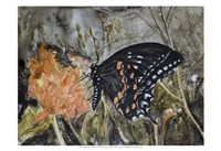 Butterfly in Nature IV Fine Art Print