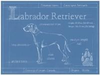 Blueprint Labrador Retriever Framed Print