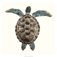 Mosaic Turtle I Framed Print