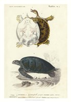 Antique Turtle Duo I Framed Print