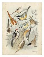 Gathering of Birds II Fine Art Print