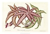 Fern Leaf Foliage III Fine Art Print