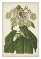 Foxglove Botanical Fine Art Print