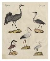 Heron Classification I Fine Art Print