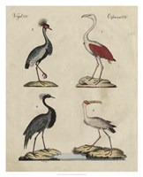 Heron Classification II Fine Art Print