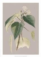 Botanical Cabinet II Fine Art Print