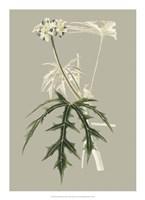 Botanical Cabinet V Fine Art Print
